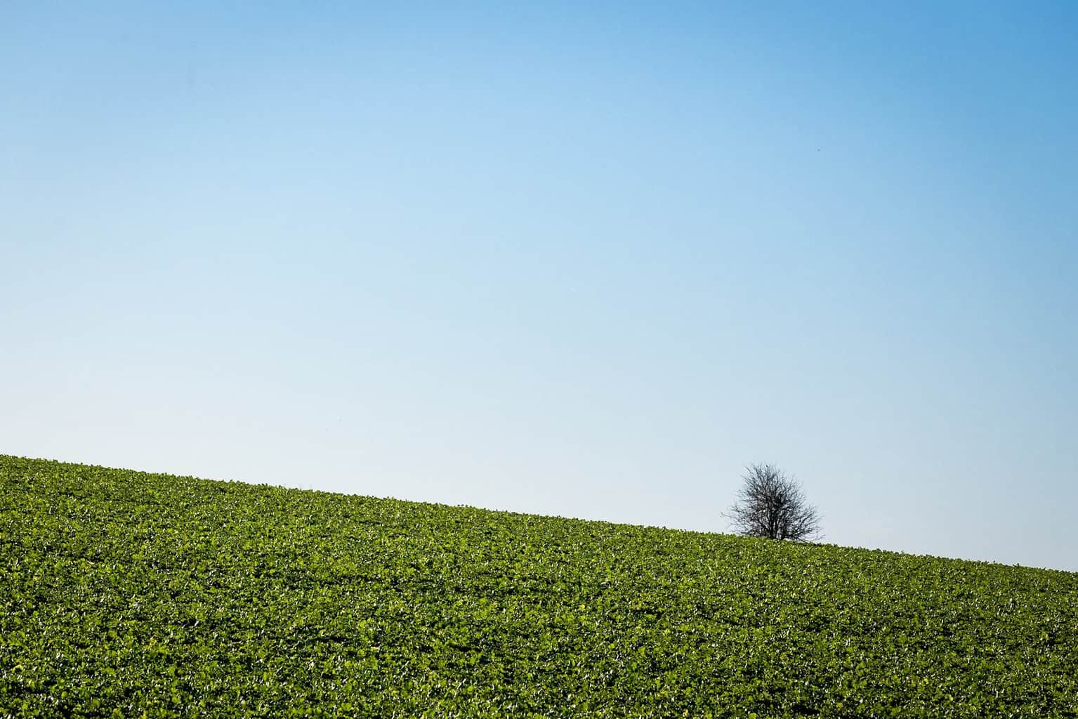 Field in Dorset - the isolation of the tree on the horizon