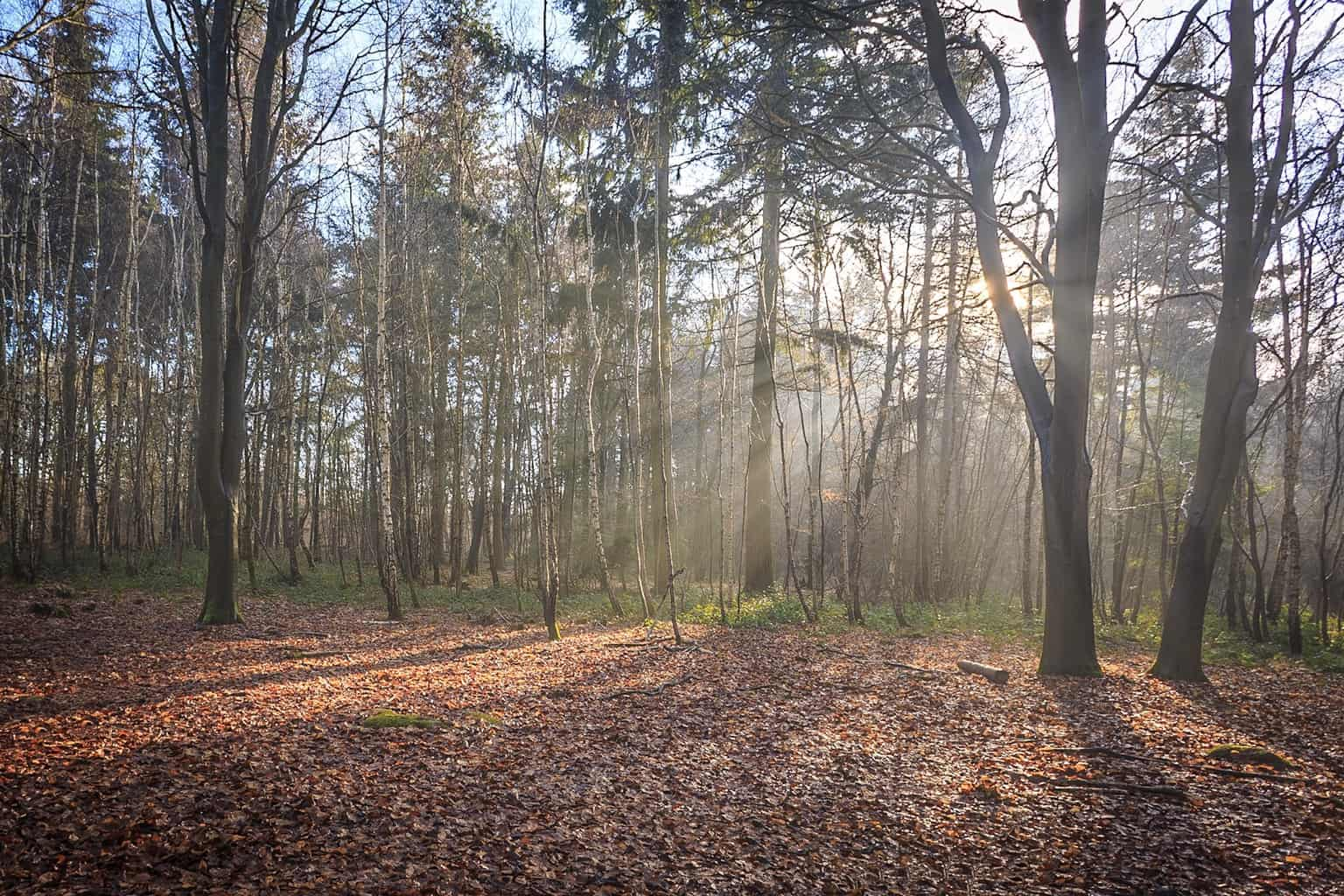 Sunshine in the woods at The Vyne by Rick McEvoy Hampshire Photographer