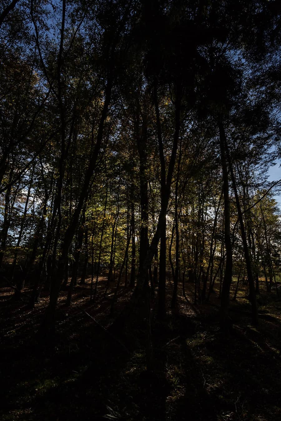 The picture of the sun streaming in through the trees - the RAW unedited file