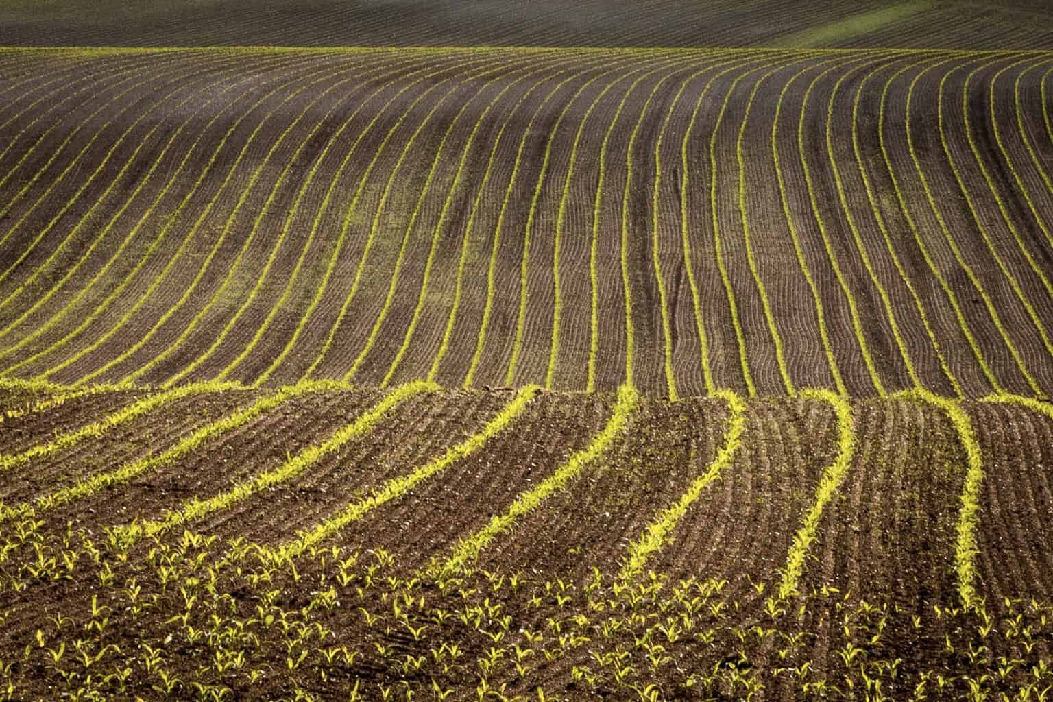 Crop of the picture of a field at sunrise by Rick McEvoy - landscape photography in Dorset