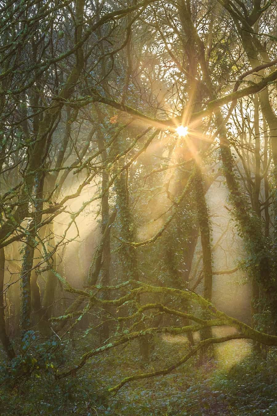 Mysterious woods by Rick McEvoy Dorset Photographer