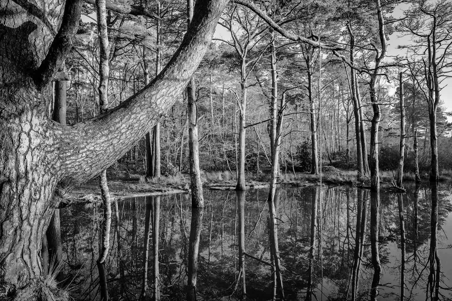 Delph Woods, Poole - black and white landscpe photography in Dorset