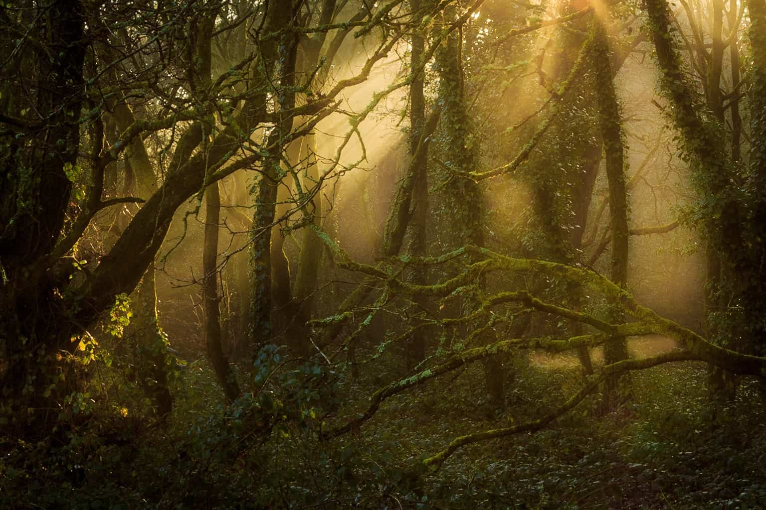 Picture of mysterious woods in Poole by Rick McEvoy