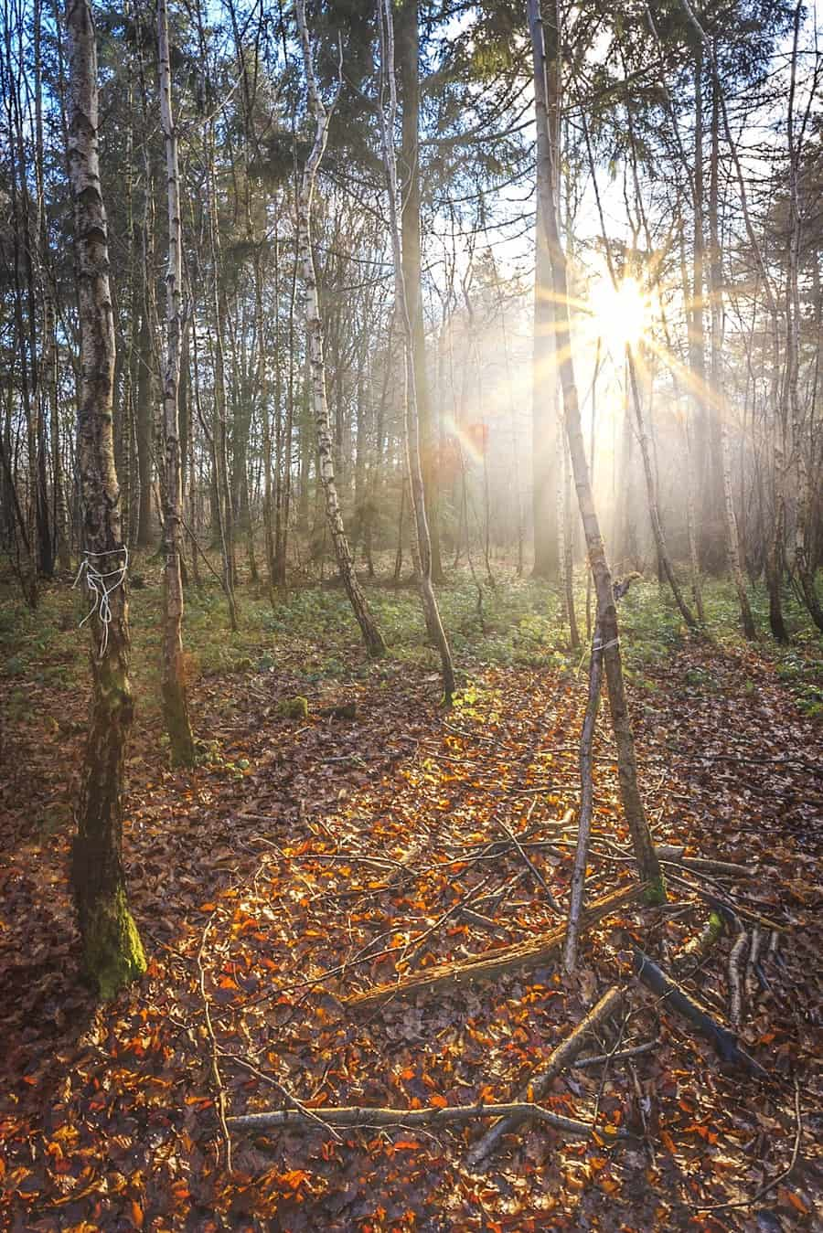 Sunshine in the woods at The Vyne