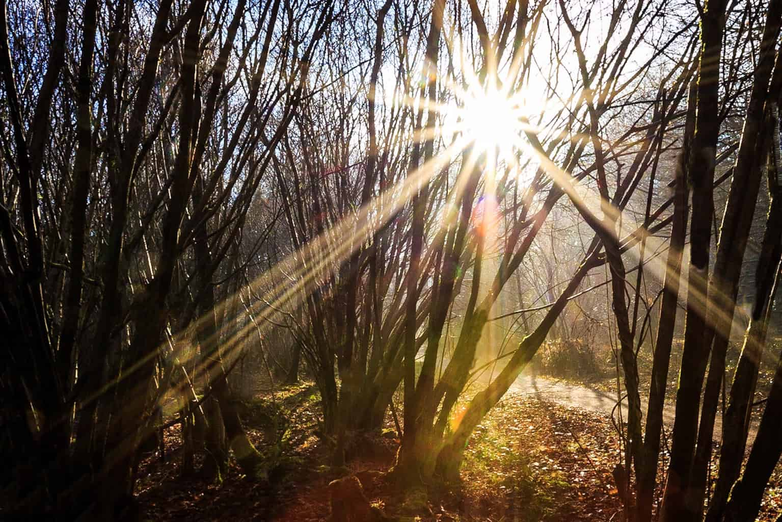 Sunshine at The Vyne by Rick McEvoy landscape photographer in Hampshire