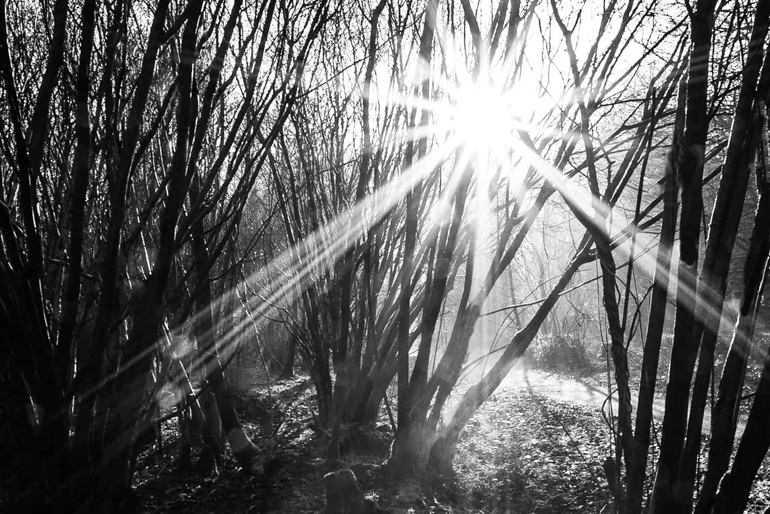 Black and white landscape photography in Hampshire by Rick McEvoy