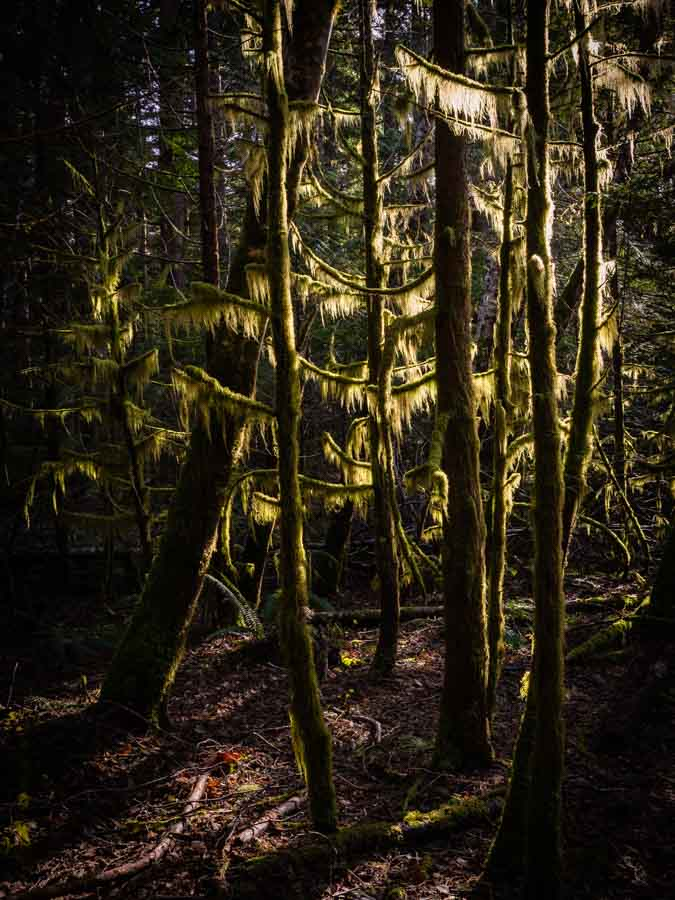 Stunning light in the fantastic forest near Shannon Falls, British Columbia, Canada