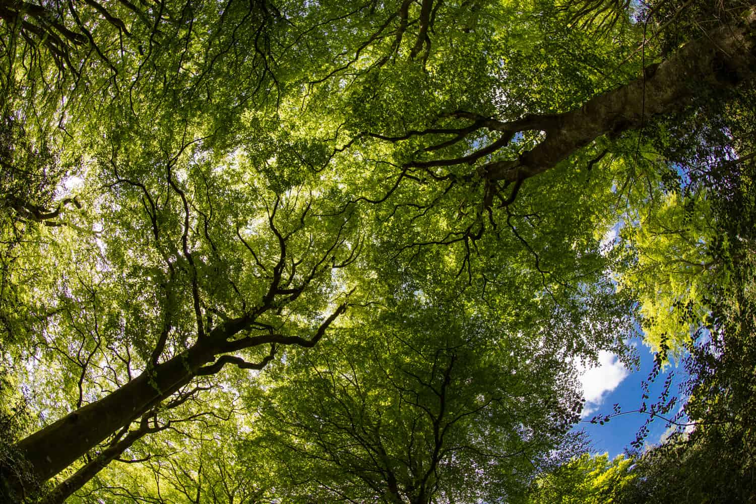 Looking up in the summer - more new photography in Hampshire