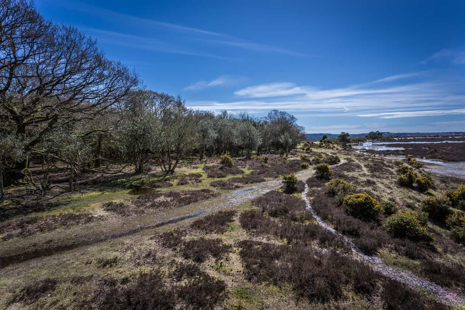 The New Forest, Hampshire