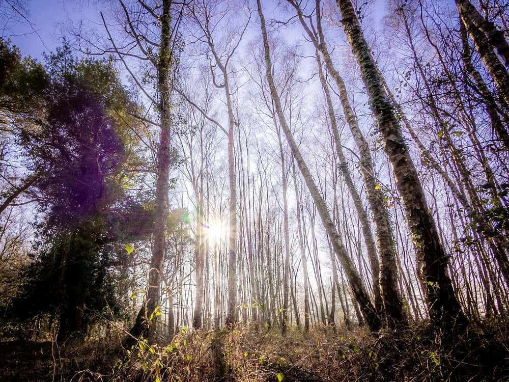 Sunshine in the New Forest by Rick McEvoy