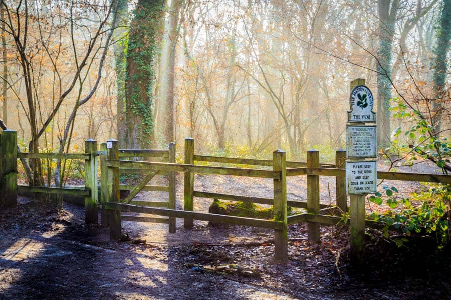 Lovely light at the entrance to Morgaston woods near The Vyne