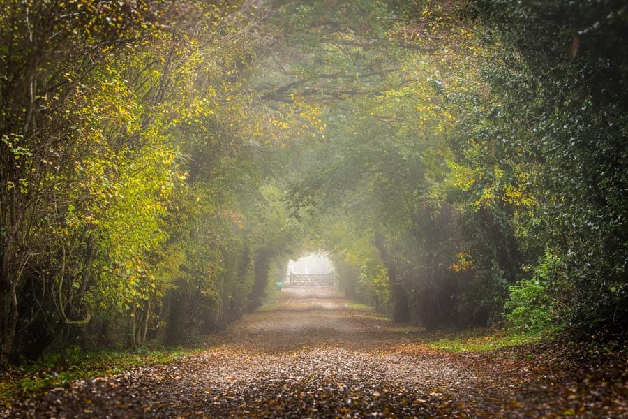 Misty road with lovely diffused light