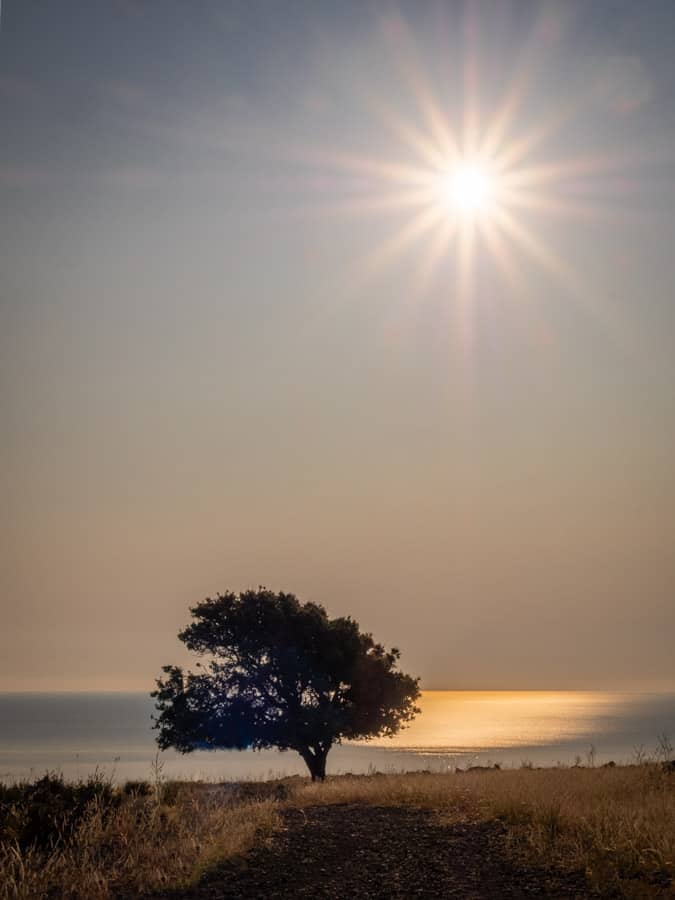 Sun and tree at sunrise on Rhodes